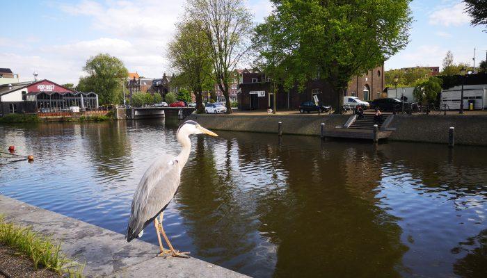Amsterdam - Ziua 2